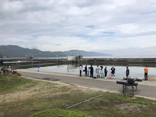 1サワラ稚魚放流の朝.jpg