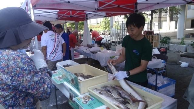 3_マイナー魚の展示.jpg
