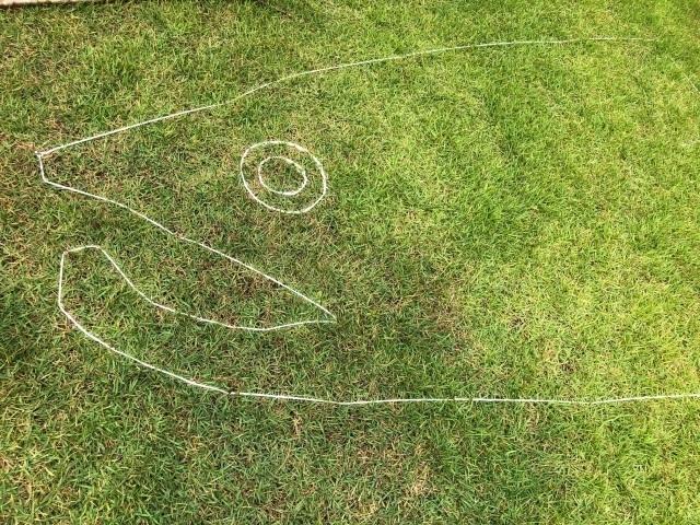 3芝のクニマス.jpg