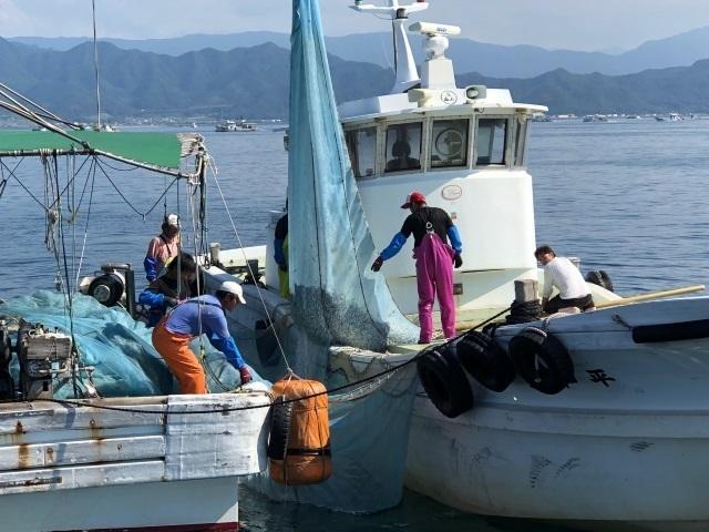 6瀬戸内海機船船びき網漁業.jpg